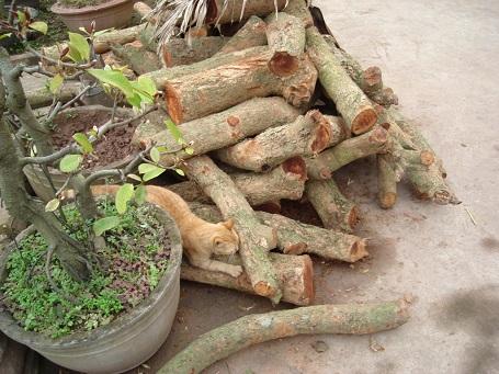 Đặc sản món Cá kho Hà Nam